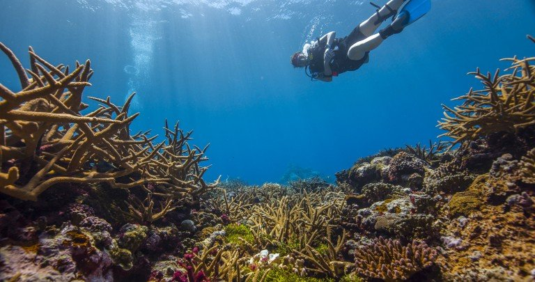 diver in the coral reef